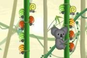 Minik Koala